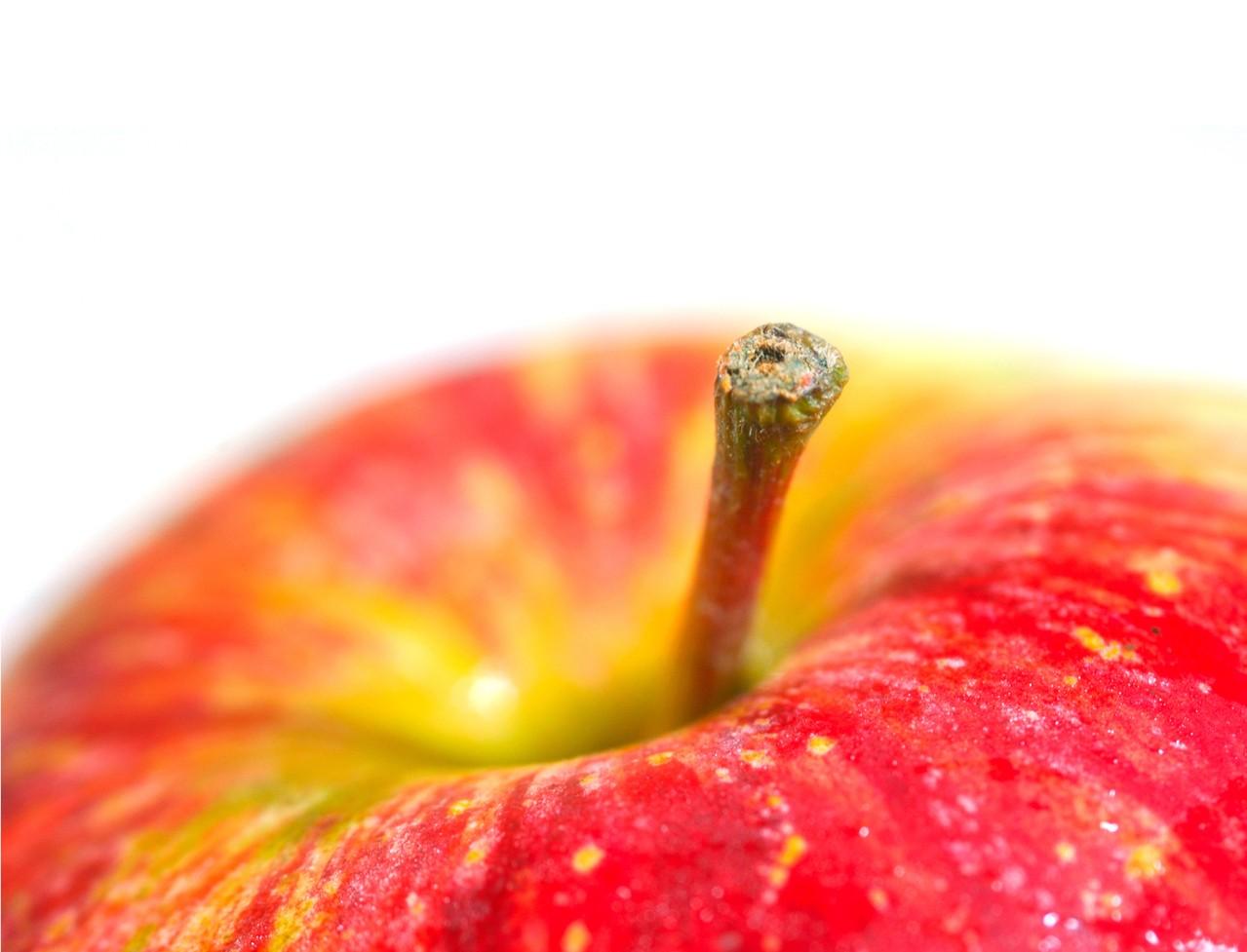 Dzikie rośliny – które warto włączyć do diety?